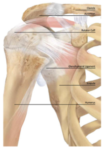 Rotator Cuff | Shoulder pain